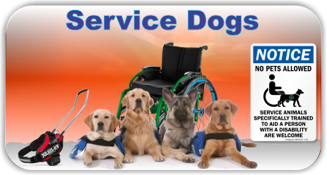 Service Dogs for Mobility Impaired