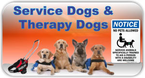 Service & Therapy Dogs