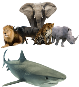 Trails & Safaris